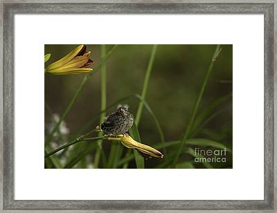 Happy And Content 13 Framed Print by E Mac MacKay