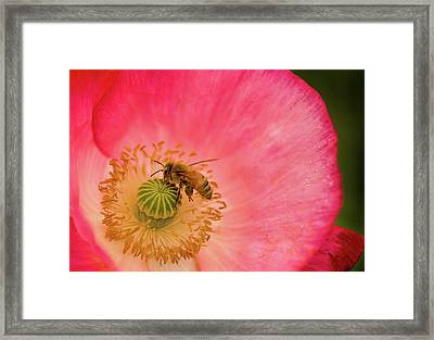 Happy Bee Framed Print