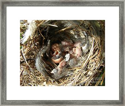 Framed Print featuring the photograph Happy Birthday by Angie Rea