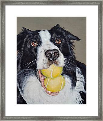 Happy Border Collie Framed Print