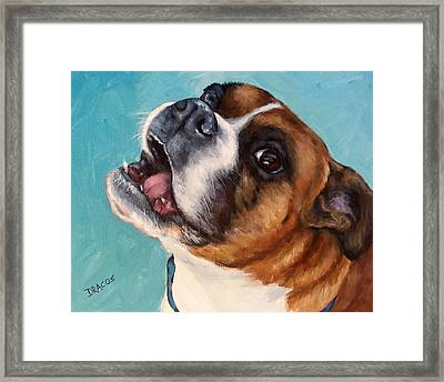 Happy Boxer Dog Framed Print by Dottie Dracos