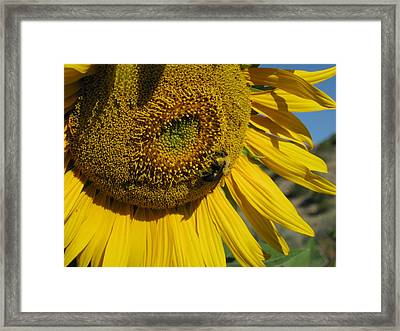 Happy Bumble Bee Framed Print