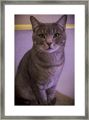 Meowna Lisa Framed Print by Esther Kather