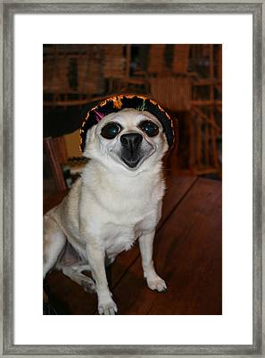Happy Chihuahua  Framed Print by Angie Wingerd