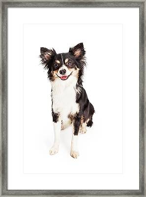 Happy Chihuahua Mixed Breed Dog Sitting Framed Print by Susan Schmitz