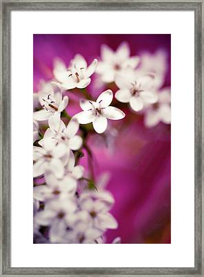 Framed Print featuring the photograph Happy by Christi Kraft