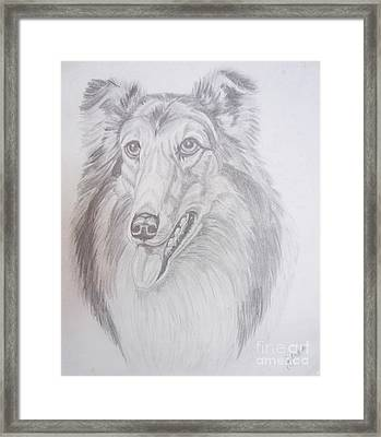 Happy Collie Framed Print