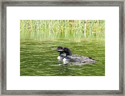 Happy Couple Framed Print by Penny Meyers
