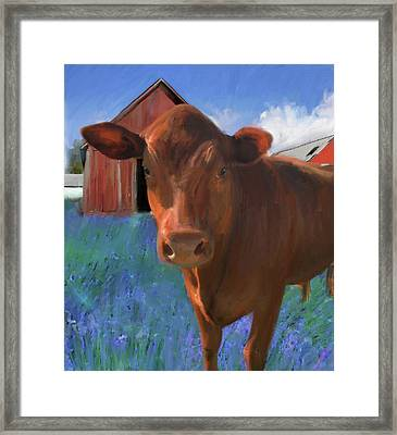 Happy Cow West Marin  Framed Print
