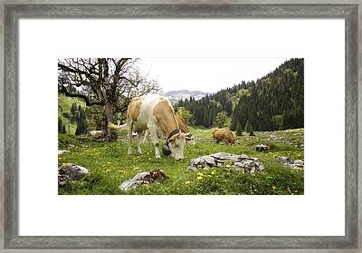 Happy Cows In High Pastures Framed Print