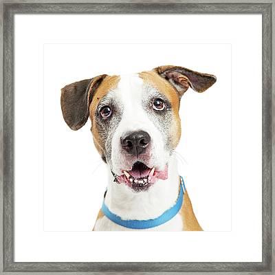 Happy Crossbreed Big Dog Closeup Framed Print by Susan Schmitz