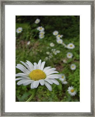 Happy Daisy Framed Print by JAMART Photography