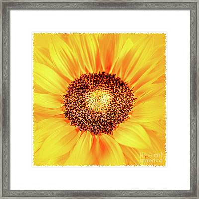 Happy Day Framed Print by Mona Stut
