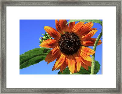 Happy Days Of Summer Framed Print by Marjorie Imbeau