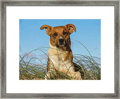 Happy Dog At The Beach Framed Print