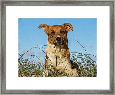 Happy Dog At The Beach Framed Print