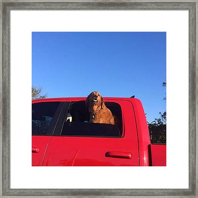 Happy Dog #juansilvaphotos #photografy Framed Print