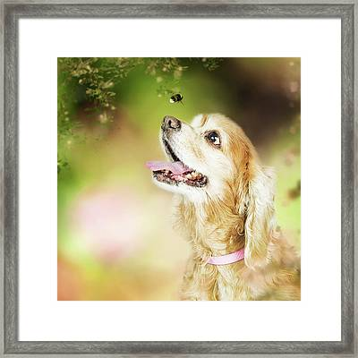 Happy Dog Outdoors Looking At Bee Framed Print