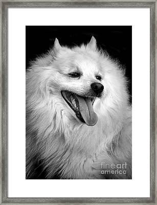 Happy Eskie Framed Print by Olivier Le Queinec