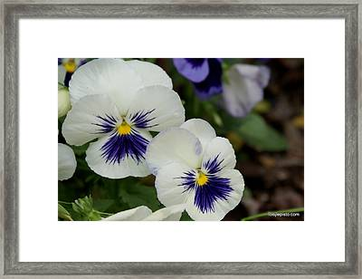 Happy Faces Framed Print by Lois Lepisto