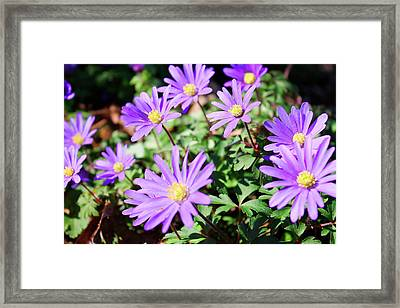 Happy Faces Framed Print by Scott Hovind