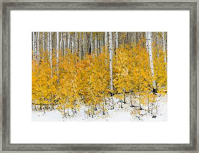 Framed Print featuring the photograph Happy Fall by Chuck Jason