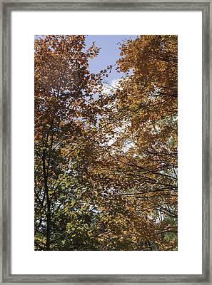 Happy Fall Yall Framed Print by Teresa Mucha