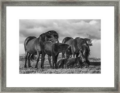 Happy Family Framed Print by Bragi Ingibergsson -