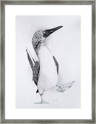Happy Feet Framed Print by Barbara Keith