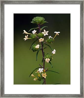 Happy Flowers Framed Print