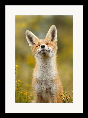 Fox Kit Framed Prints