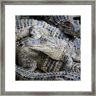 Happy Gator Framed Print