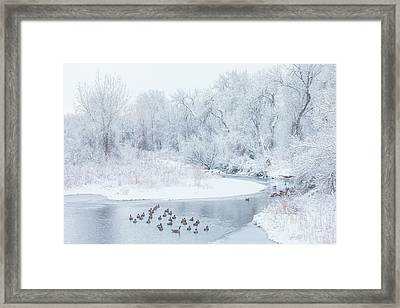 Framed Print featuring the photograph Happy Geese by Darren White