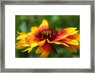Happy Go Lucky  Framed Print by Connie Handscomb