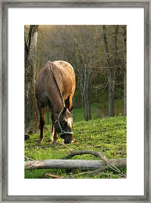 Happy Grazing Framed Print by Angela Rath