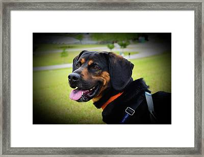 Happy Gus Framed Print