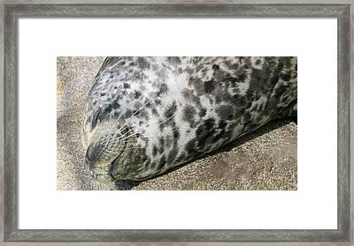 Happy Harbor Seal Framed Print