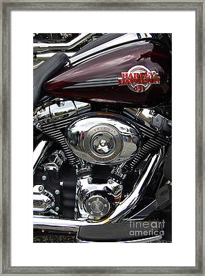 Happy Tour Framed Print by Diane E Berry