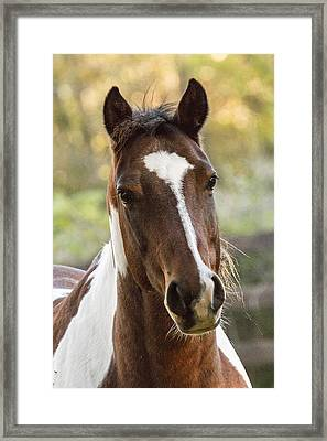 Happy Horse Framed Print