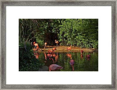 Happy Hour Framed Print