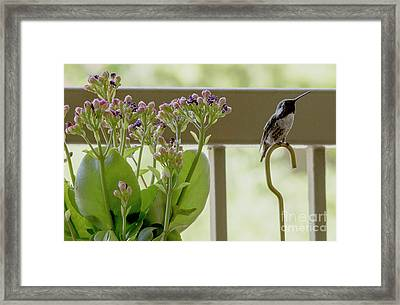 Happy Hummer Framed Print by Anne Rodkin