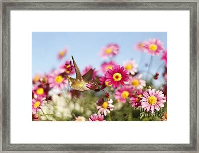Happy Hummingbird Framed Print
