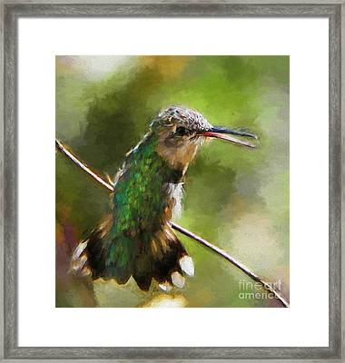Happy Hummingbird Framed Print by Tina  LeCour