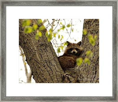 Happy In Her Hideout Framed Print