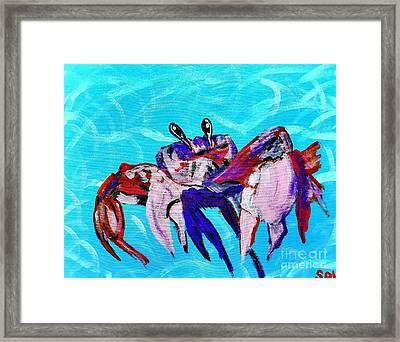 Happy Little Crab  Framed Print by Scott D Van Osdol