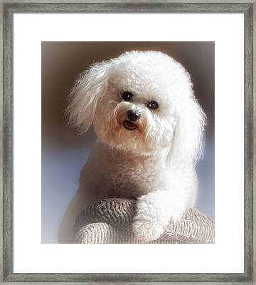 Happy Framed Print by Lynn Andrews