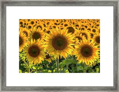 Happy Framed Print by Mark Kiver