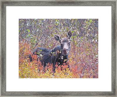 Happy Moose Framed Print by Elizabeth Dow