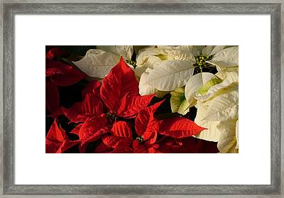 Happy New Year Y'all Framed Print by Tim Good