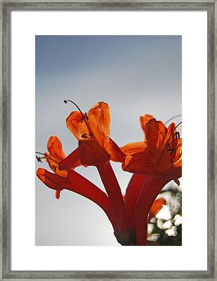 Happy Orange Framed Print by Jean Booth
